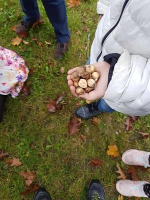 Ein Kind hält einige Blumenzwiebeln in der Hand